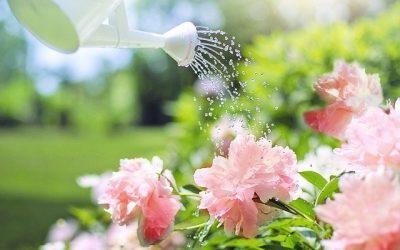 Transformez votre jardin en havre de la durabilité