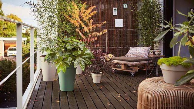 Que mettre dans de grands pots sur une terrasse ?